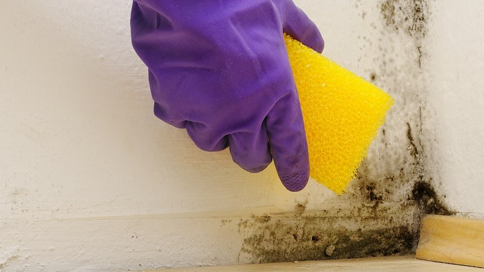 Traitement des moisissures dans la salle de bain - Humidite dans salle de bain ...