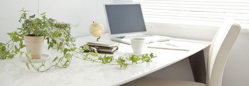 un peu de nature au quotidien avec les plantes de bureau. Black Bedroom Furniture Sets. Home Design Ideas